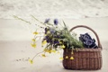 Картинка песок, море, цветы, корзина, фотоаппарат, корзинка, полевые