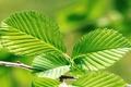 Картинка листья, макро, обои, зелёные