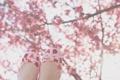 Картинка солнце, дерево, ноги, обувь