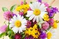 Картинка цветы, ромашки, букет, желтые, клевер, розовые