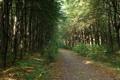 Картинка лето, листья, деревья, природа, растения, тропинка