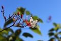 Картинка цветок, лето, небо, природа, веточка, бабочка, крылья