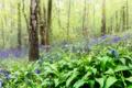 Картинка лес, трава, цветы, весна