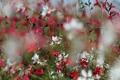 Картинка цветы, природа, красота, весна, цветение