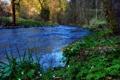 Картинка лес, трава, деревья, цветы, река, поток
