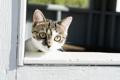 Картинка фон, взгляд, кошка