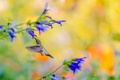 Картинка цветы, яркий, фон, колибри, птичка