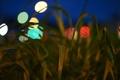 Картинка трава, листья, природа, огни, вечер, блик