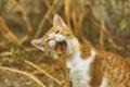 Картинка бело-рыжий, котенок, кошка