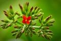 Картинка цветок, зелень, ветки, фон, красный