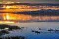 Картинка закат, птица, вода