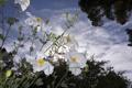 Картинка облака, лепестки, небо, макро, цветы