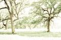 Картинка свет, деревья, природа, стиль