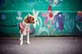 Картинка настроение, собака, шарф