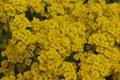 Картинка цветы, стебли, лепестки, полевые, жёлтые