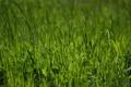 Картинка зелень, лето, трава, природа, фото, весна, зелёный