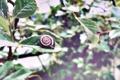 Картинка листья, улитка, Macro, Leaf, Mollusk