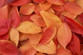 Картинка листья, макро, обои