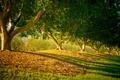 Картинка деревья, природа, сад