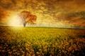 Картинка поле, цветы, Дерево