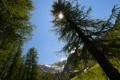 Картинка деревья, горы, блики, Солнце, Швейцария