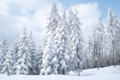 Картинка зима, небо, снег, природа, обои, ёлки