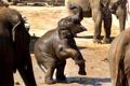 Картинка малыш, слоны, зоопарк