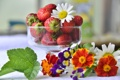 Картинка клубника, ромашка, лето, виола, бархатцы, ягоды, цветы