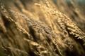 Картинка осень, трава, поля природа с природой, поле, урожай, пшеница