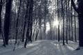 Картинка зима, лес, солнце, снег