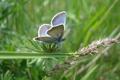 Картинка лето, трава, бабочка