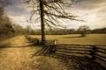 Картинка поле, пейзаж, дерево, забор