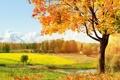 Картинка деревья, пейзаж, дом, водоем