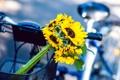 Картинка подсолнухи, цветы, велосипед, корзина, желтые