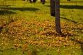 Картинка осень, деревца, лужайка, листья, тени, трава, ветви