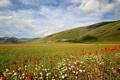 Картинка ромашка, трава, небо, маки, луг, горы, цветы