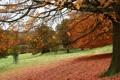 Картинка листья, деревья, парк, Осень