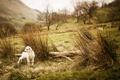Картинка животные, трава, природа, фото, пейзажи, овцы, овечки