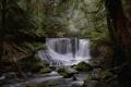 Картинка лес, деревья, река, камни, заросли, водопад