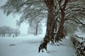 Картинка зима, снег, деревья, собака