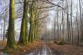 Картинка лес, ряд, брёвна, дорога, даль, девевья