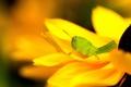 Картинка цветок, макро, кузнечик
