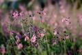 Картинка бутоны, цветы, стебли, поле, боке