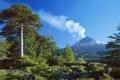 Картинка лес, деревья, природа, дым, гора, вулкан