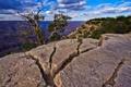 Картинка небо, дерево, скалы, каньон