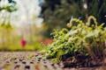 Картинка дорожка, природа, незабудки, парк, боке, фокус, цветы