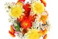 Картинка букет, белый фон, хризантемы