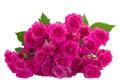 Картинка цветы, flowers, листики, leaves, розовые розы, pink roses
