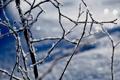Картинка зима, иней, снег, снежинки, ветки, блики, мороз