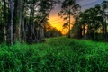 Картинка трава, деревья, закат, кипарисы